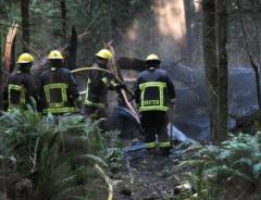 В Stanley Park случился пожар, уничтоживший 150-летний кедр