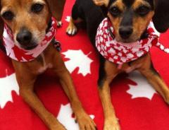 Зоомагазинам Ванкувера запретили продавать собак, котов и кроликов