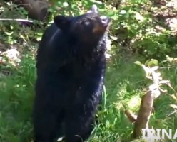 Как начиналась наша Суббота! Осторожно, смертельно опасно! Медведь на кухнe. (Часть 1)