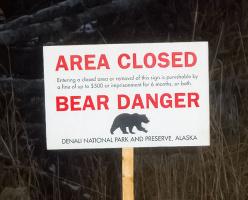 Столкновение с медведями в лесах Канады: что стоит знать