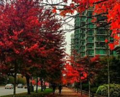Лучшие фото канадской осени от наших подписчиков