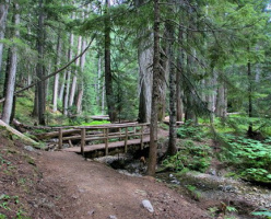 Тропа к древним кедрам (Ancient Cedars Trail)