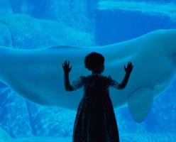 Ванкуверский Океанариум (The Vancouver Aquarium)