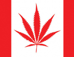Либералы легализуют марихуану 1 июля 2018