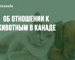 Об отношении к животным в Канаде