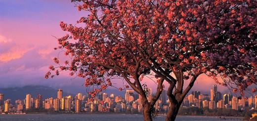 Фото 40.media.tumblr.com