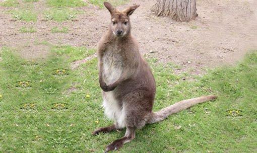 Фото kangaroocreekfarm.com