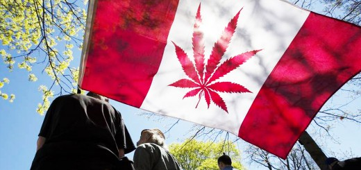 Фото cannabisculture.com