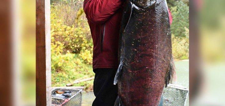 Фото  c/o Pacific Salmon Foundation