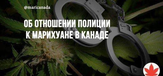Об отношении полиции к марихуане в Канаде