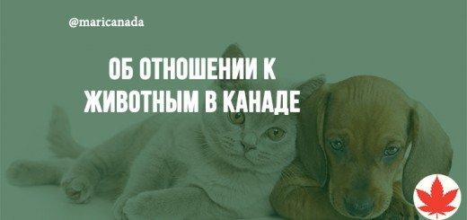 catdog_mari_vancouverok