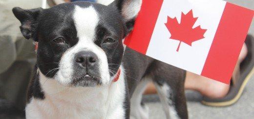 Фото Ontario SPCA