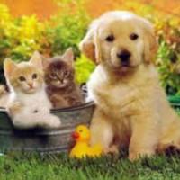 Средства для животных
